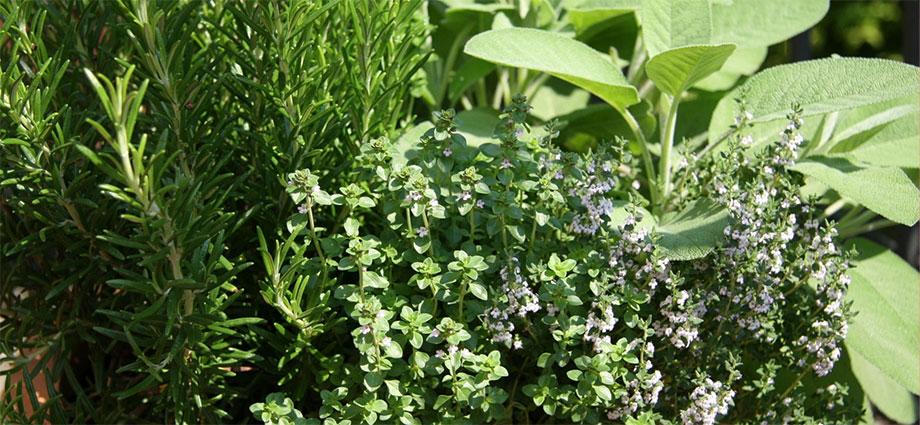 herbs-slider