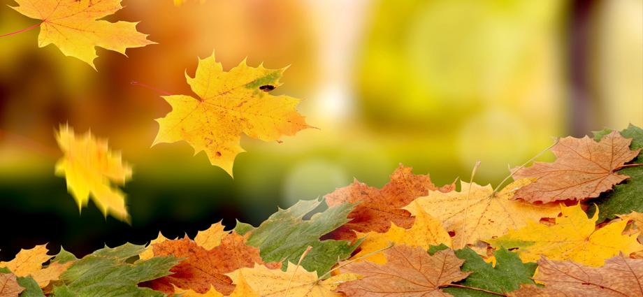 falling leafslider