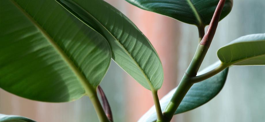 plant slider